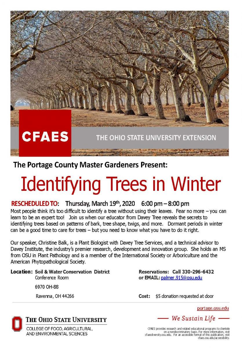 Identifying Trees in Winter